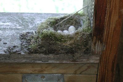 Bird nest in wildlife blind on Beaver Lake